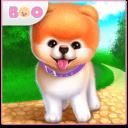 Boo – El Perro Más Lindo